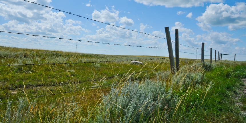Estimated Costs for Livestock Fencing - Livestock Fencing, Fencing ...